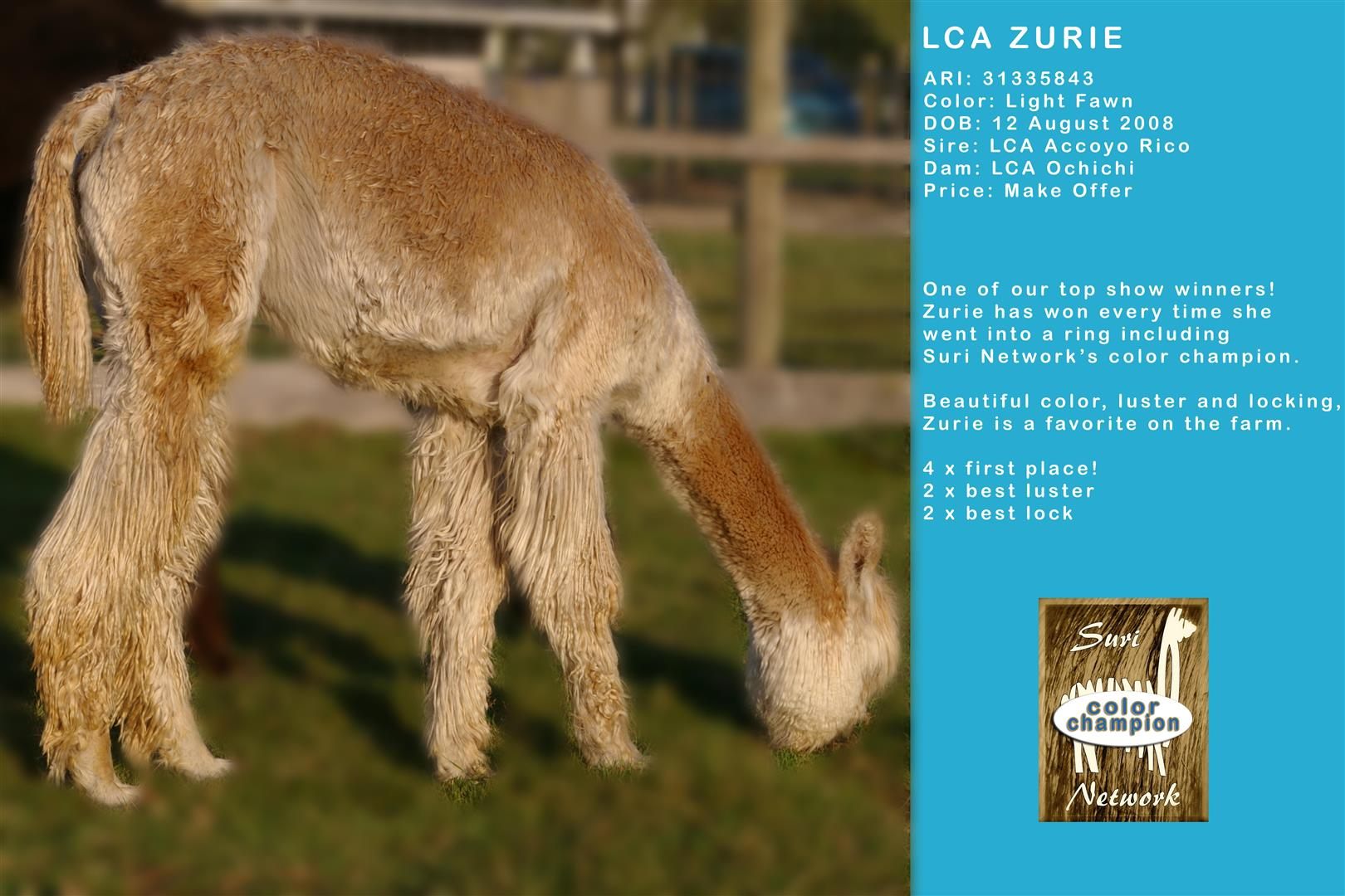 LCA Zurie female alpaca for sale